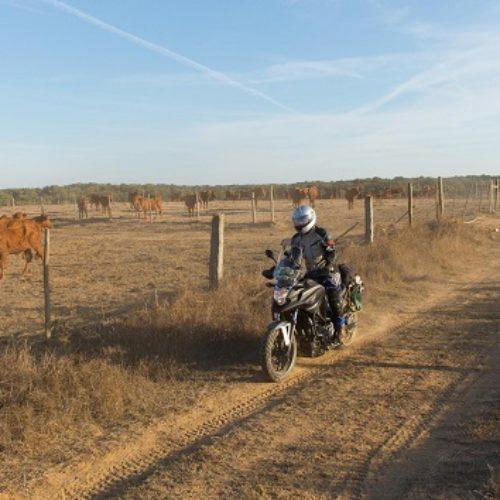 Terminou o 3.º Lés-a-Lés Off-Road sob o signo da reflorestação das áreas ardidas